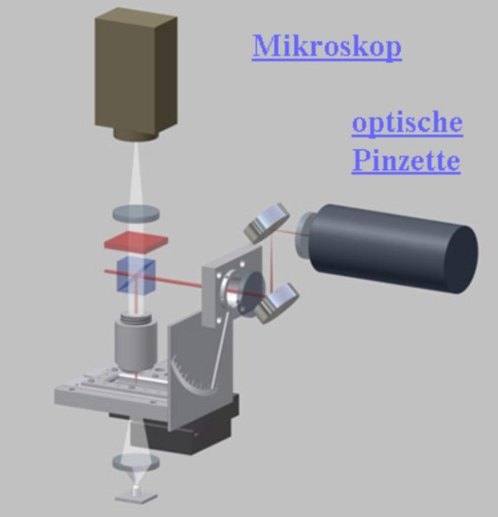 optische Pinzette (c)